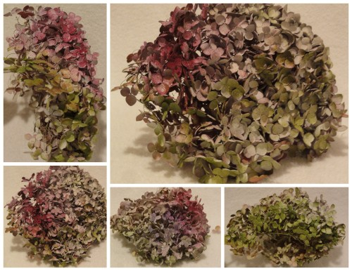 spray painted hydrangeas!