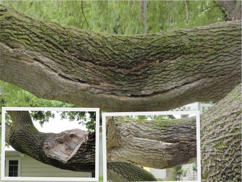 the tree damages get worse---
