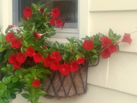 just two of the window boxes...