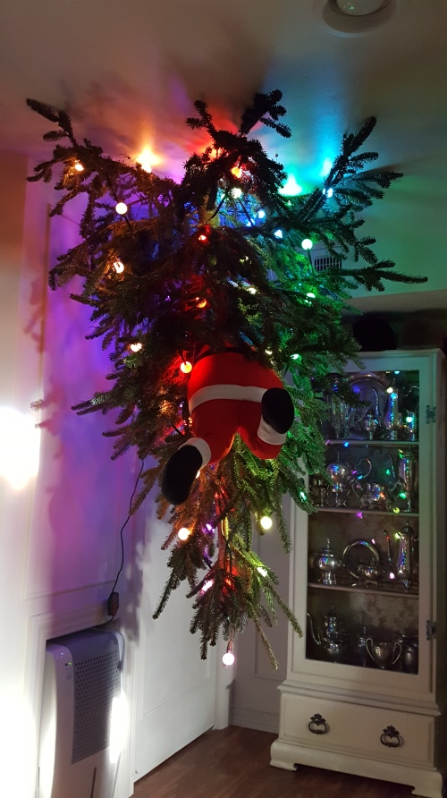 hanging a tree UPside down!