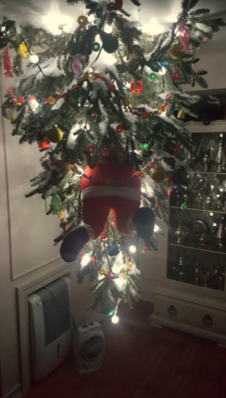the kiddo's tree!