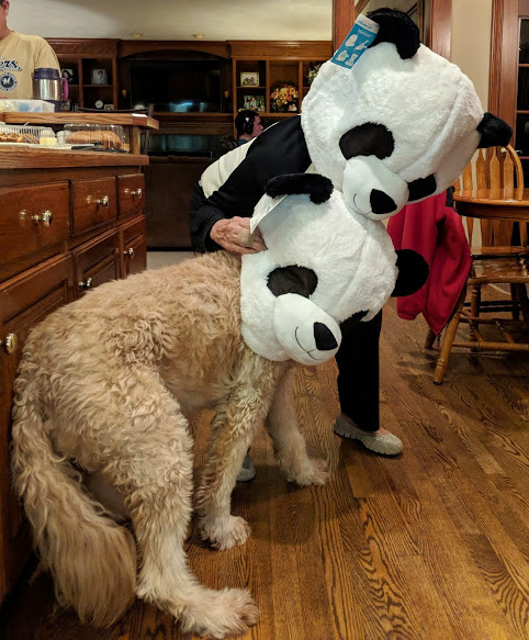 -a whole family of Pandas!
